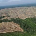Огромные лесные пространства Сибири уже превратились в пустыню