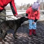 В Белгородской области бешеная собака искусала 17 человек, в том числе 9 детей