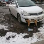 В Таганроге единоросс несколько дней ездил с мертвой собакой в бампере