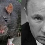 «Наша первая тонна кокаина» — как окружение Путина торгует наркотой