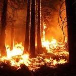 В России горит около 170 тыс. га лесных земель