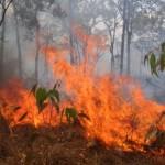 В Приамурье оставили догорать четыре лесных пожара