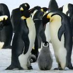 «Бессмертный полк» пройдет по Антарктиде среди пингвинов