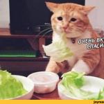 Котиков запретят превращать в веганов в Британии