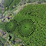 Лес кругами: экcперимент который длится полвека в Японии