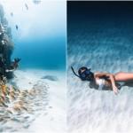 Впечатляющие фотографии морской жизни Нолана Омура