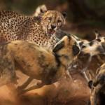 Лучшие кадры дикой природы с Wildlife Photographer of the Year 2019