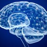 Ученые выяснили, какая область мозга отвечает за чувство прекрасного
