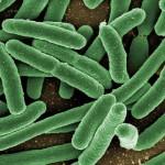 Кишечные бактерии любят кофе и выпить — ученые