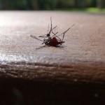 Ученые пытаются генетически модифицировать комаров, чтобы истребить вид
