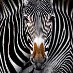 Лучшие фотографии с конкурса Nature Conservancy