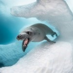 Конкурс подводной фотографии Ocean Art 2019