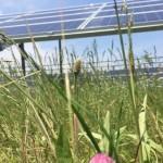 Под солнечными панелями вырастает на 40% больше урожая: энергетическое ноу-хау на Харьковщине